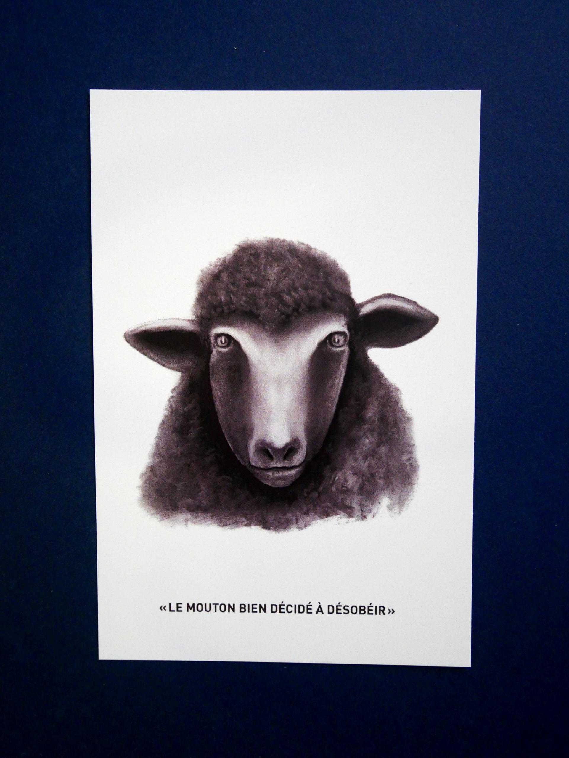 "Carte postale ""mouton"""